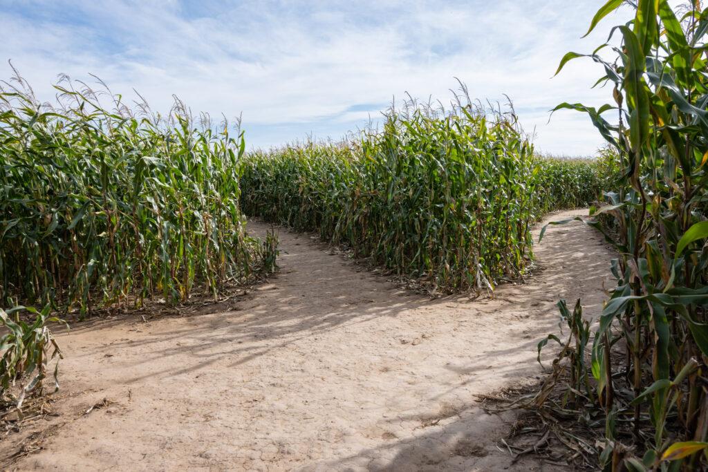 Labyrinth aus Mais